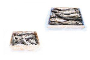 Horse-Mackerel-box